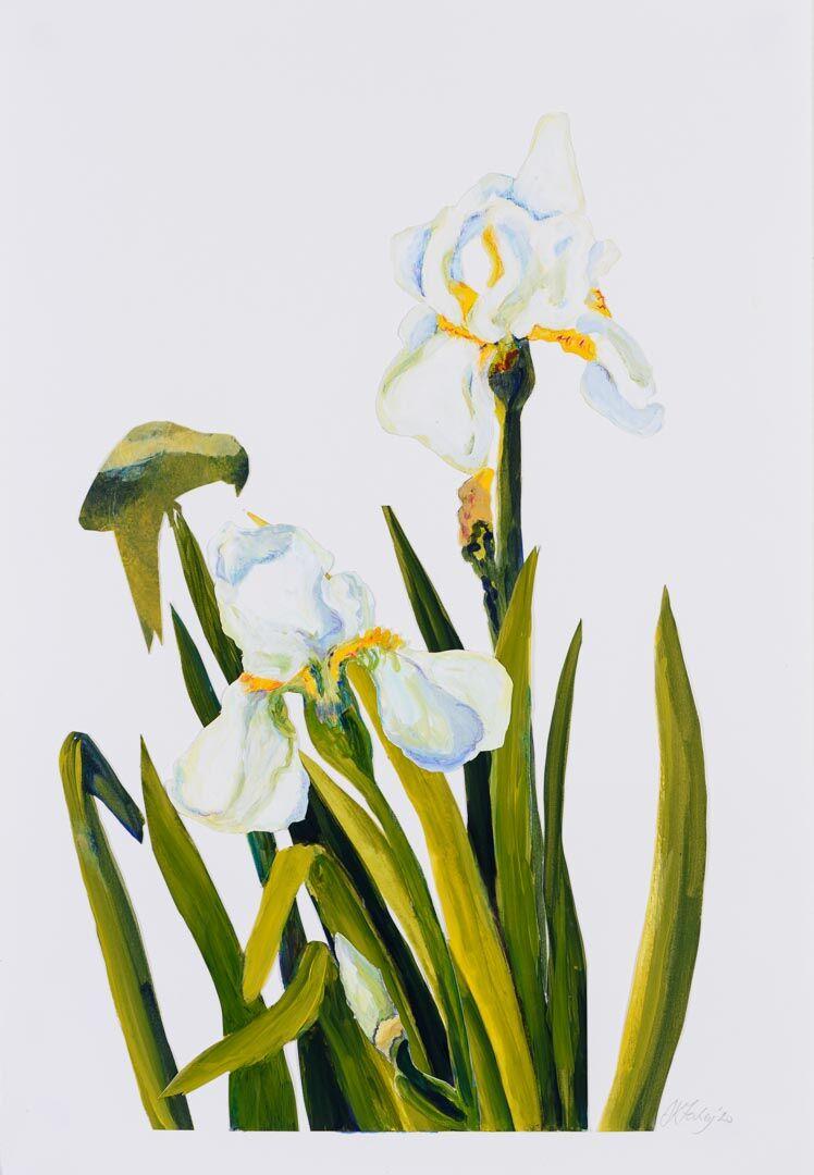 White Iris 2 jpg